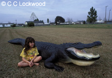 American Alligator Products